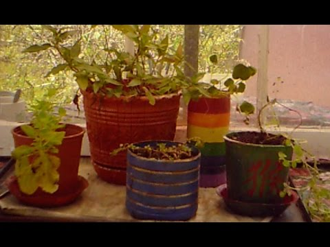 Container Gardening, Part 2.1 -- Arts'n'Crafts:   Painting Plastic