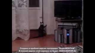 демоническая кошка!!!!