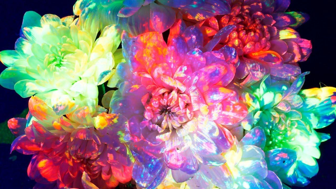 Как СДЕЛАТЬ Светящиеся Цветы?