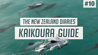 Wild Dolphins & Seals of Kaikoura 🐬 The BEST Wildlife Tour | New Zealand Guide #10