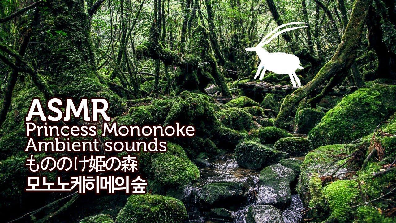 ASMR Princess Mononoke 3D Ambient Sounds | 모노노케히메의 숲 입체 음향 | もののけ姫の森 | 원령공주