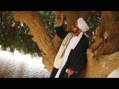 Hasil gambar untuk pohon sahabi habib umar
