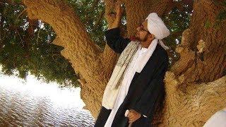 Video Pohon SAHABI, Sahabat Nabi yang Masih Hidup hingga Kini download MP3, 3GP, MP4, WEBM, AVI, FLV September 2018
