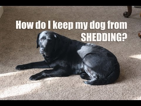 how-can-i-prevent-and-reduce-shedding?