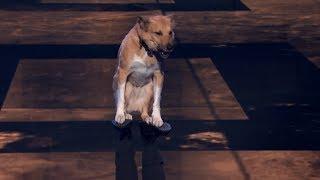 Inspektor gadżet i jego wspaniały pies! [Mam Talent!]