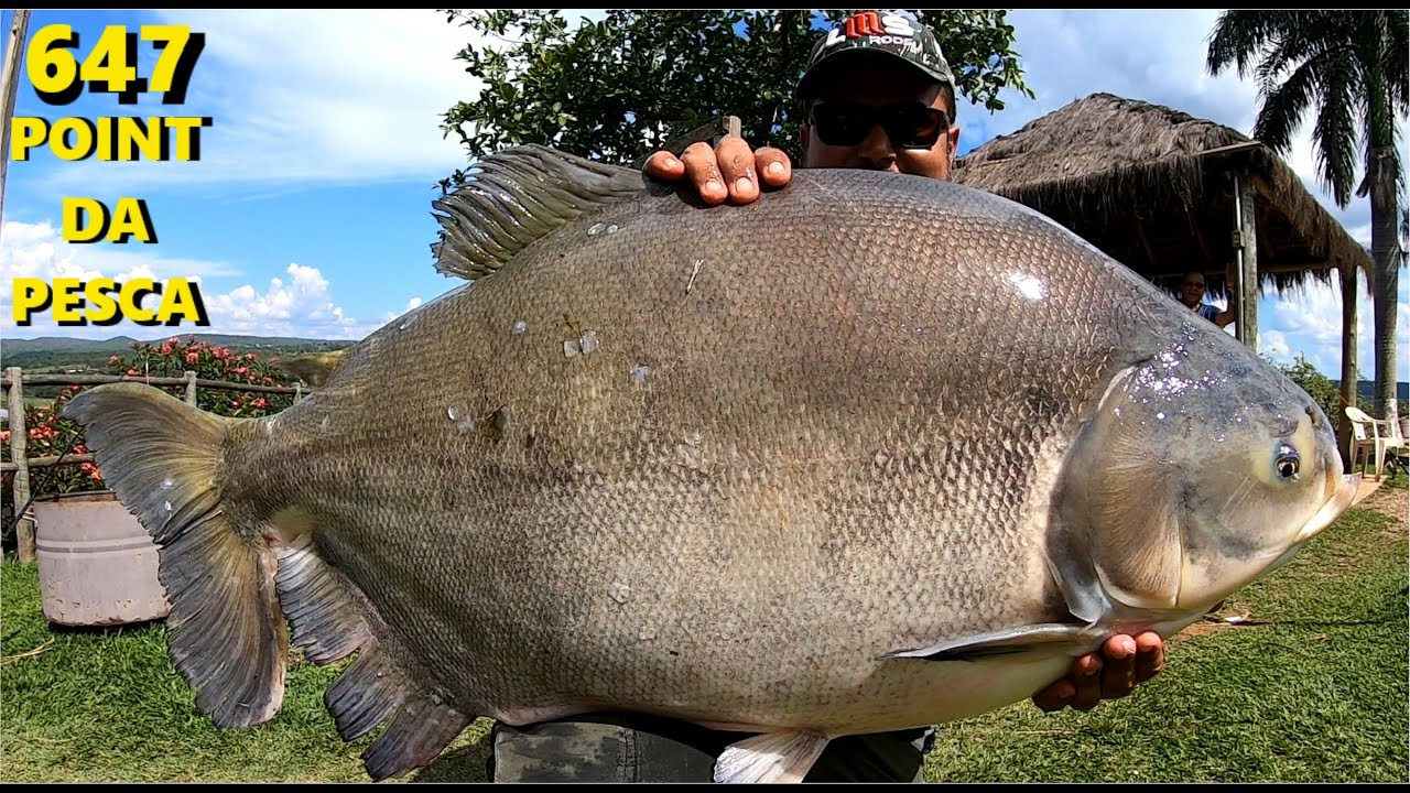 No Point da Pesca também tem dias difíceis mas com peixes grandes - Programa Fishingtur na TV 647