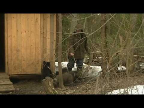 Baby bear cubs learn about outside
