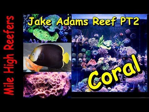 Jake Adams Reef Tank Pt2 stock