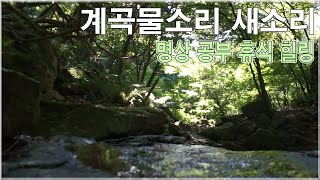 계곡물소리 새소리 - 자연의소리 영상 , 명상, 공부, 휴식, 수면 효과음 백색소음