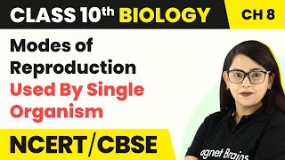 Modes of Reproduction | How Do Organisms Reproduce? | Class 10 Biology