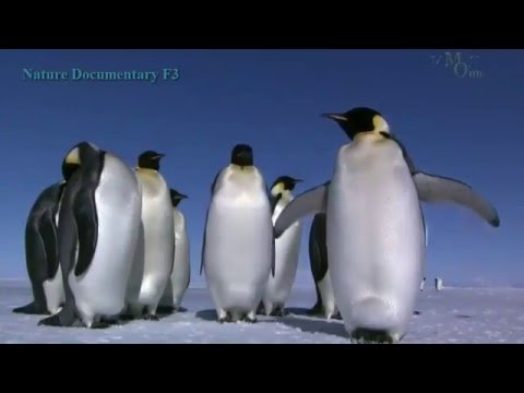 Beauty Under Antarctica's Ice Sheet, Icebergs Penguins