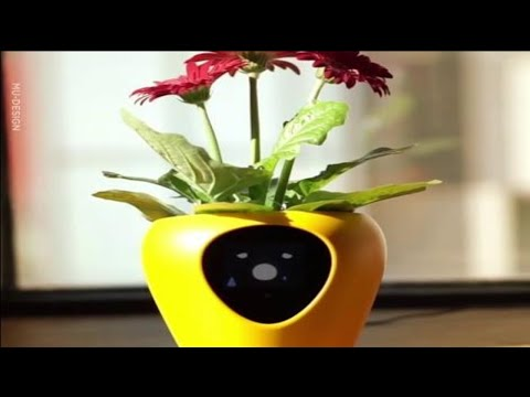 Robin Jones - Would You Buy This?: A Smart Planter With Feelings