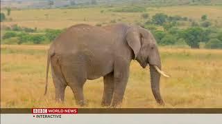 Wildebeest Migration spurs tourism