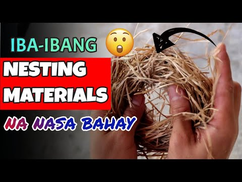 NESTING MATERIALS FOR LOVEBIRDS THAT ARE AVAILABLE AT HOME
