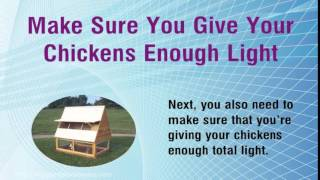 How To Build A Chicken House Properly And Quickly -  3 Important Steps