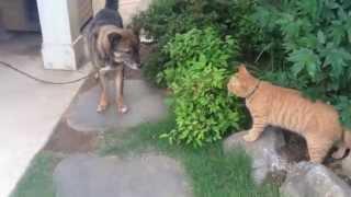 楽しく外探検してましたが、犬(茶太郎)の一声で隠れちゃいました。 仲良...