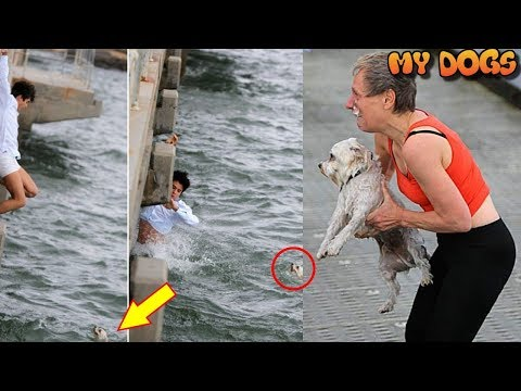 Man At Pier To Scatter His Grandmother's Ashes & Ended Up Saving A Drowning Dog