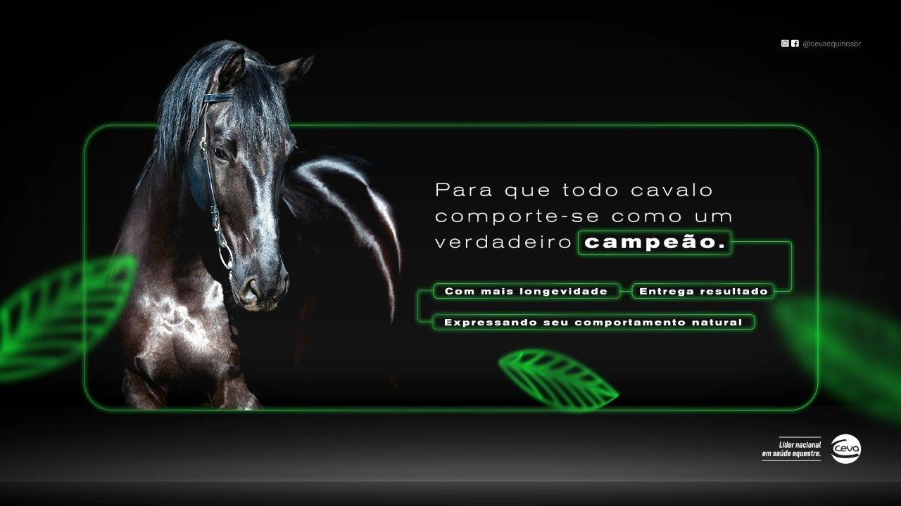 Download Lançamento Ceva Equinos