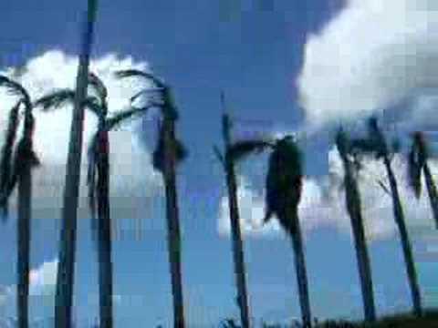 Palmbomen na Larry
