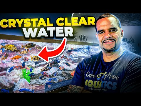 Crystal Clear Aquarium Water - Top 3 Tips (SIMPLE)