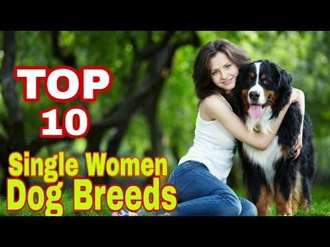 TOP-10 Dog Breed For Single Women/ 2017-18 / Popular breed / Aryan Dog Club Aryandogclub