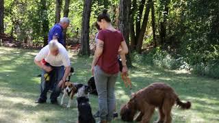 Caleb & Shadow auf dem Hundeplatz (9 & 6 Monate alt)