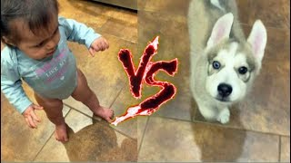 Funny Babies vs Dogs - Who Wins?