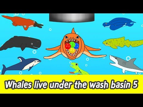 [EN] Whales live under the wash basin 5, kids animals animation, whales adventureㅣCoCosToy