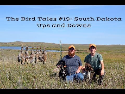 Sharptail Hunting In South Dakota- The Bird Tales #19