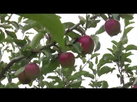 Certificate in Organic Horticulture Episode 2
