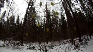 """""""Встреча"""" в лесу с диким """"животным"""""""