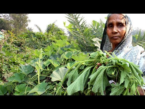 Village Food – Healthy Lau Shak Recipe by Grandmother | Cooking Natural Gourd Spinach