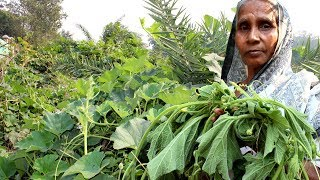 Village Food - Healthy Lau Shak Recipe by Grandmother | Cooking Natural Gourd Spinach
