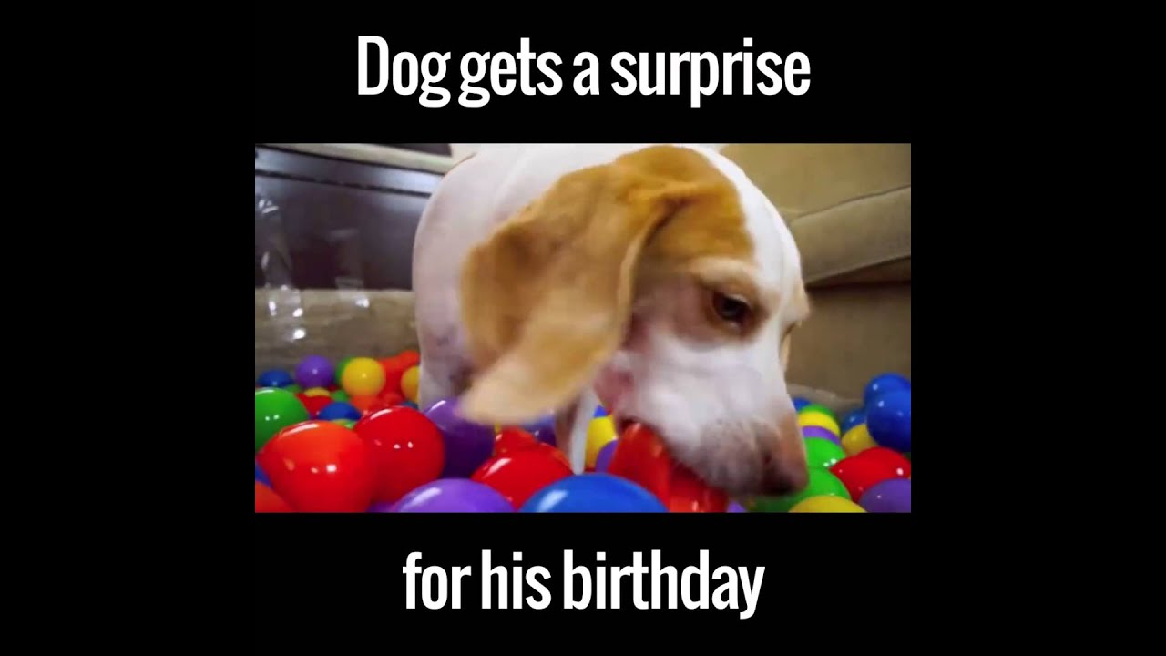 This Dog Got An Awesome Surprise Birthday Present...