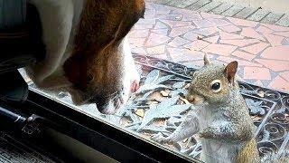 Eichhörnchen klopft jeden Tag - erst 8 Jahre später wurde der Grund bekannt!
