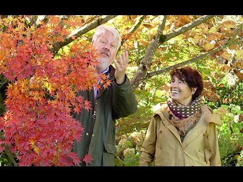 les plus beaux arbres d 39 automne du jardin de la souloire