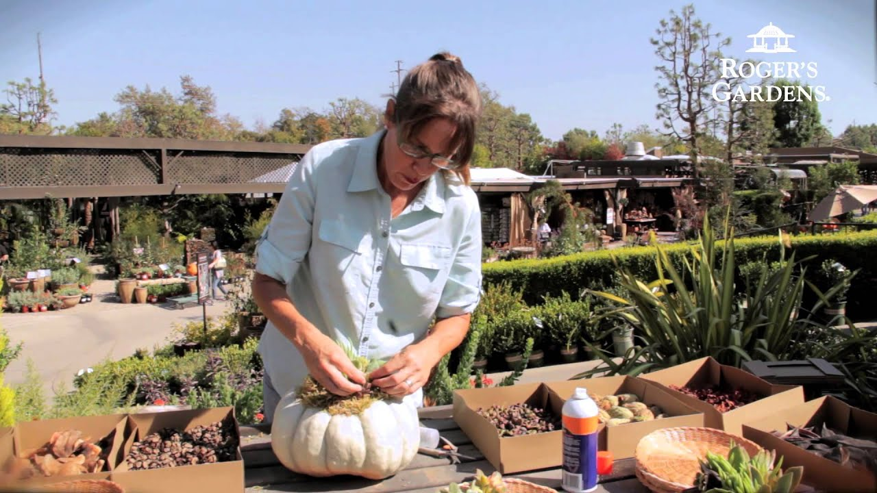 Rogeru0027s Gardens | Succulent Topped Pumpkin Workshop   YouTube