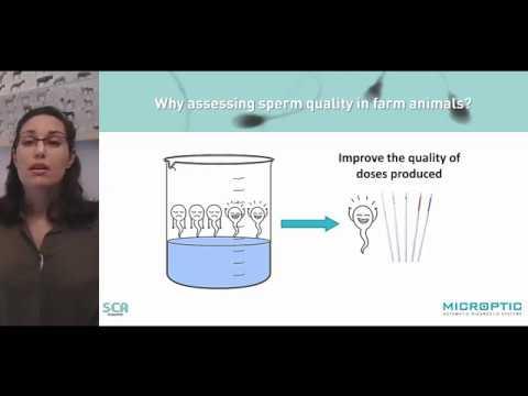 webinar-#3:-analyzing-sperm-quality-in-farm-animals