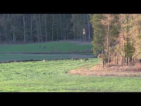 South Carolina Deer
