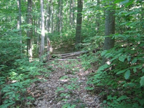 Trail building and clearing..just being in the woods