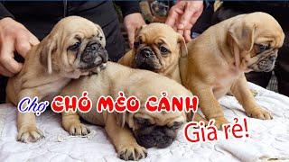 Chợ Phiên Chó Mèo cảnh thú cưng lớn nhất Việt Nam | DU LỊCH KHÁM PHÁ