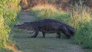 Florida Travel: Walking With Giants at Circle B Bar Reserve, Lakeland
