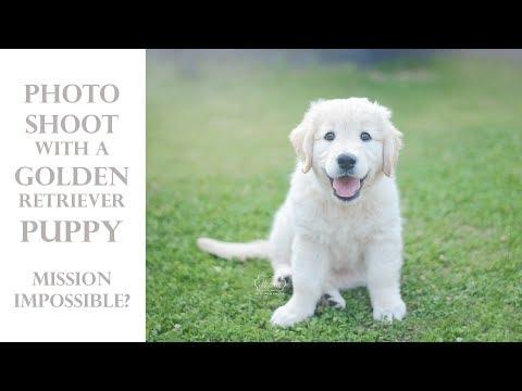 A photoshoot with a puppy dog #fail ... Featuring an adorable Golden Retriever Puppy!