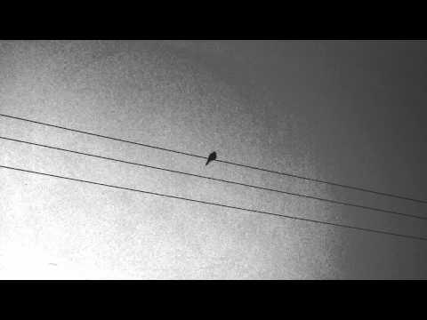 Apparat - Ash/Black Veil (2011)