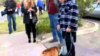 Surfing Dog Parade Float - DogChannel.com