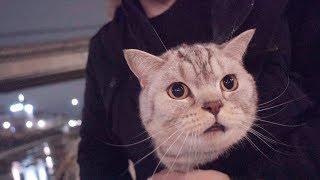 태어나서 처음 외출을 한 고양이 반응은 ?