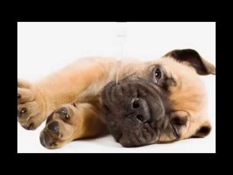 Собаки фото обои на рабочий стол, картинки с собаками