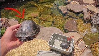 Video We Got TURTLES for the POND!! download MP3, 3GP, MP4, WEBM, AVI, FLV Oktober 2018