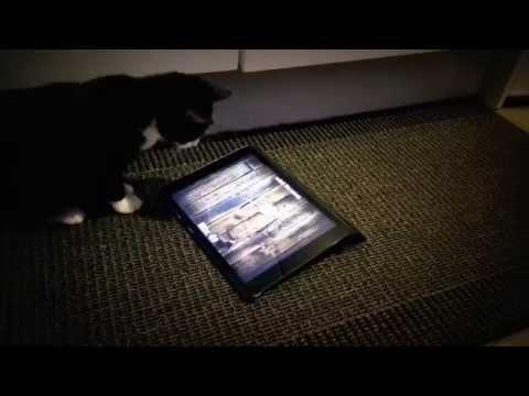 Katze jagt Maus auf dem Tablet