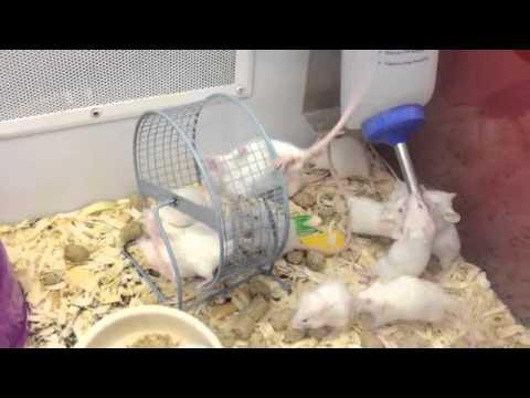 Petco Rats Petco Mice - YouTube